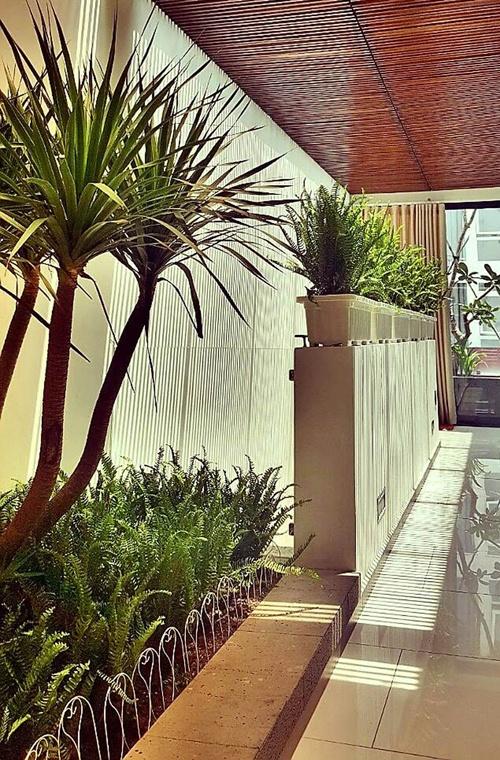 Nathan Lee mua nhiều cây cảnh trang trí cho nhà riêng. Đây là một góc hành lang trước cửa phòng làm việc của anh.