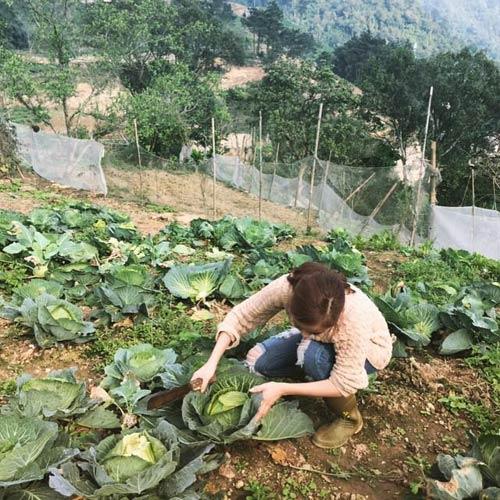 Cô nông dân hào hứng hái bắp cải sạch