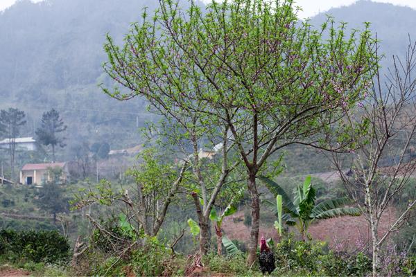 Nhiều cây lá vẫn xanh mướt với hoa nở lác đác.