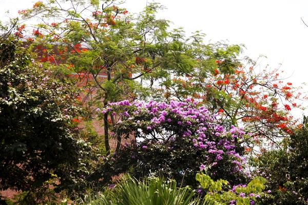 Mùa hè là mùa của nhiều sắc màu.