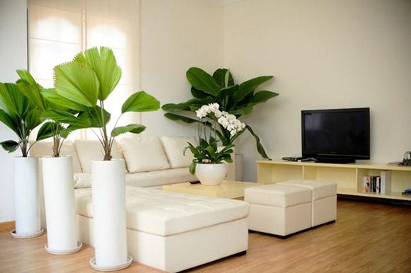 Phòng khách của căn hộ thanh lịch với gam màu trắng và nổi bật với màu xanh của cây.