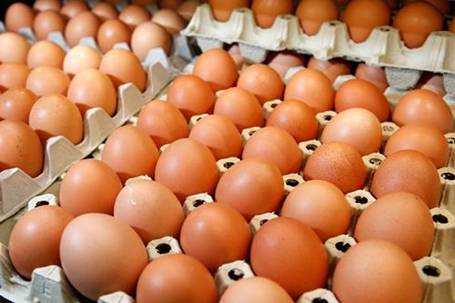 Giá trứng gà xuất trại giảm mạnh do nguồn cung tăng đột biến.