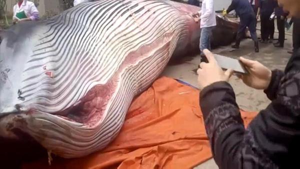 Con cá voi bị xẻ thịt ngay gần căng tin công ty. Ảnh: Asia Wire