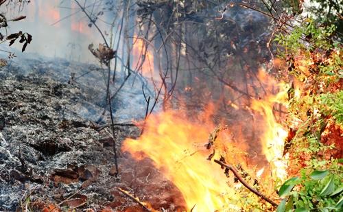 Rừng bạch đàn, keo trên núi Một, huyện Thủy Nguyên, Hải Phòng bùng cháy dữ dội. Ảnh: Giang Chinh