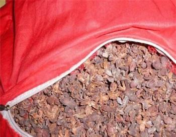 Ruột gối vỏ hạt cây bách đang được đồn là có thể chữa bệnh tóc bạc sớm (Ảnh minh họa)