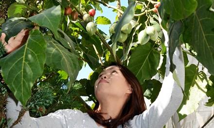 Chị Thủy bên cây cà chua thân gỗ Tamarillo. Ảnh: Tiền phong