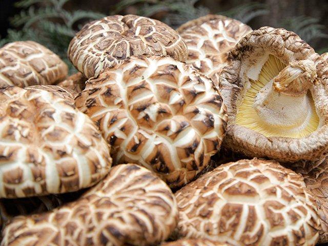 Nấm hương Nhật Bản đang được bán với giá 8,6 triệu đồng/kg vẫn hút khách