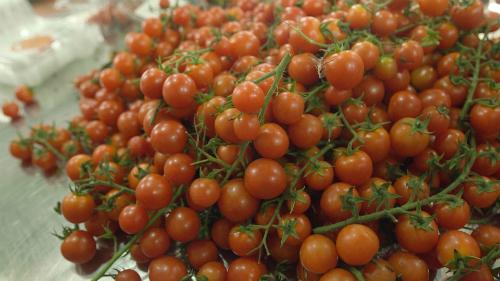 Cà chua nên được bảo quản ở nhiệt độ phòng. Ảnh: Bizmedia.