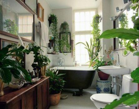 Trồng cây xanh trong bồn tắm, bậu cửa là gợi ý nên thử.