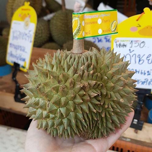 Sầu riêng mini được dán nhãn tiếng Thái, giá bán khoảng 110.000-150.000 đồng một kg.