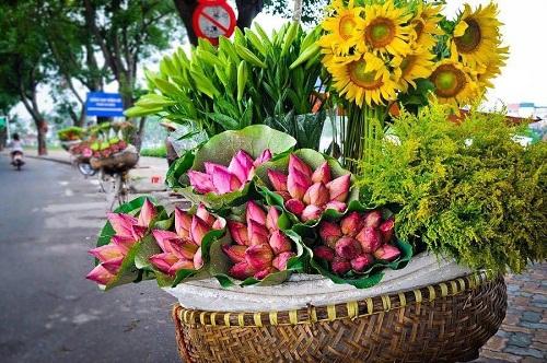 Những bó sen xinh xắn theo những người bán hàng rong ruổi khắp phố phường Hà Nội.