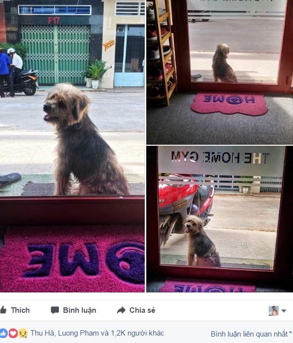 Bài viết tìm chó được dân mạng chia sẻ.