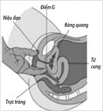 """""""Điểm G"""" nằm cách lỗ âm đạo 3-5cm."""