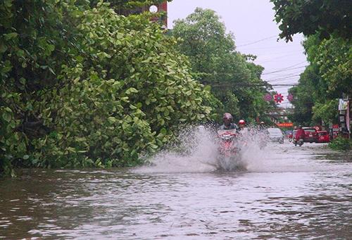 TP Hà Tĩnh một số cây gãy đổ, nhiều tuyến đường bị ngập. Ảnh: Đức Hùng.