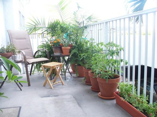 Gia chủ nên trồng cây phù hợp với hướng ban công để cây sinh trưởng tốt. (Ảnh minh họa)
