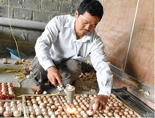 Anh Dũng kiểm tra trứng trước khi đưa vào lò ấp. Ảnh: Việt Linh.