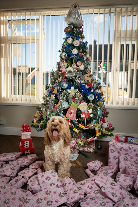 Cô chủ mua 68 món quà Giáng sinh cho chó cưng