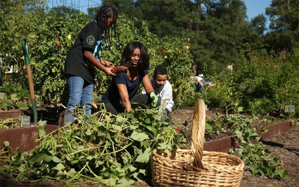 Michelle Obama thu hoạch ở vườn rau của Nhà Trắng. (Ảnh: AP)