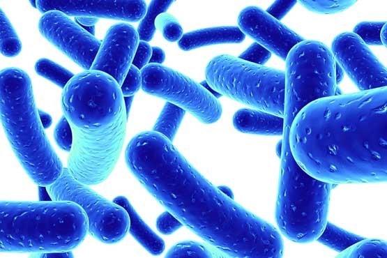 Lợi khuẩn Bifido giúp duy trì hệ tiêu hóa khỏe mạnh
