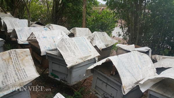 Những thùng ong được người dân đặt ngay ngăn giáp các vùng có nhiều cây hoa sú, vẹt đua nở.