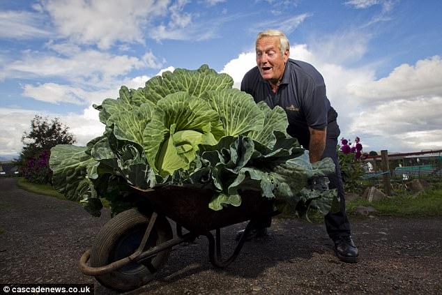 Theo ông Calder chia sẻ, cây bắp cải đủ để nấu 300 bát canh.