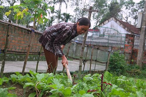 Cựu giáo viên mầm non dự định nhận thêm ruộng, cải tạo vườn tược trồng rau để kiếm thêm thu nhập sau khi nghỉ hưu. Ảnh: Đức Hùng