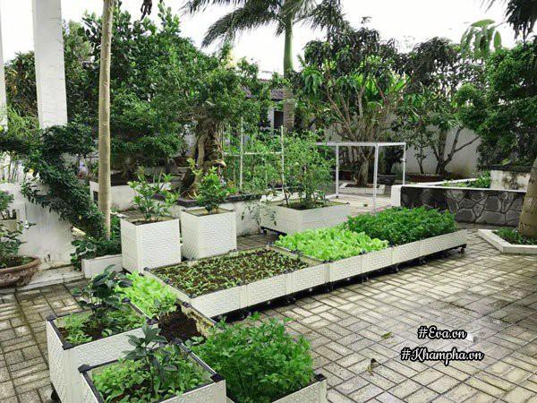 Khu vườn rất rộng với nhiều loại rau xanh tốt và cây ăn quả sai trĩu cành.