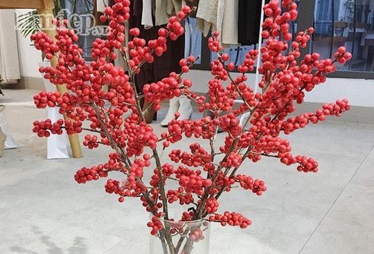 Đào đông đỏ - lựa chọn của nhiều nhà trong dịp Tết