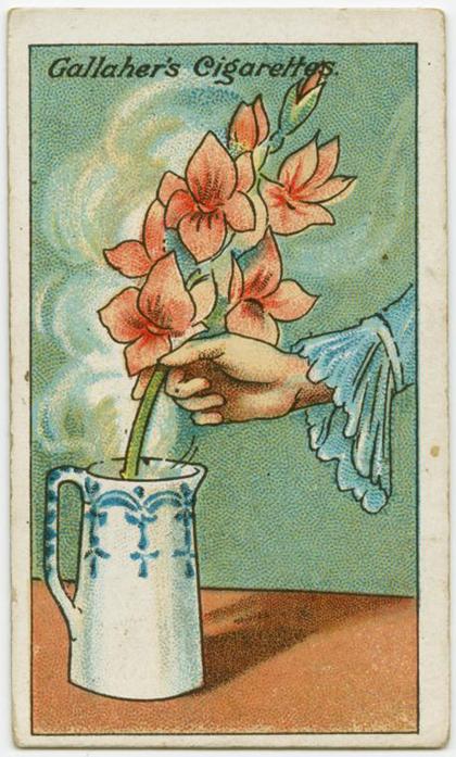 Hoa mua về bị héo, hãy cắm chúng vào nước nóng và để đến khi nước đã nguội đi. Hoa héo sẽ hồi sinh trở lại. Lúc này bạn cắt bỏ lá, cuống và cắm vào nước lạnh như thường.