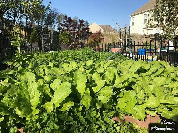 ...và vườn rau xanh đáng ngưỡng mộ của bà mẹ 8x.