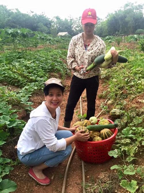 Nhớ lại năm đầu trồng thử nghiệm dưa, tuy chưa có nhiều kinh nghiệm nhưng nữ nghệ sĩ đã thu hoạch được hơn hai tạ dưa lê, dưa bở.