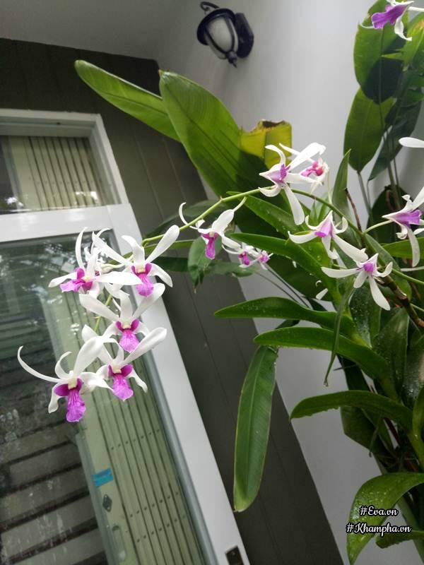 Khu vườn của chị Thanh chỉ rộng 30m2 nhưng ngập tràn sắc hoa.