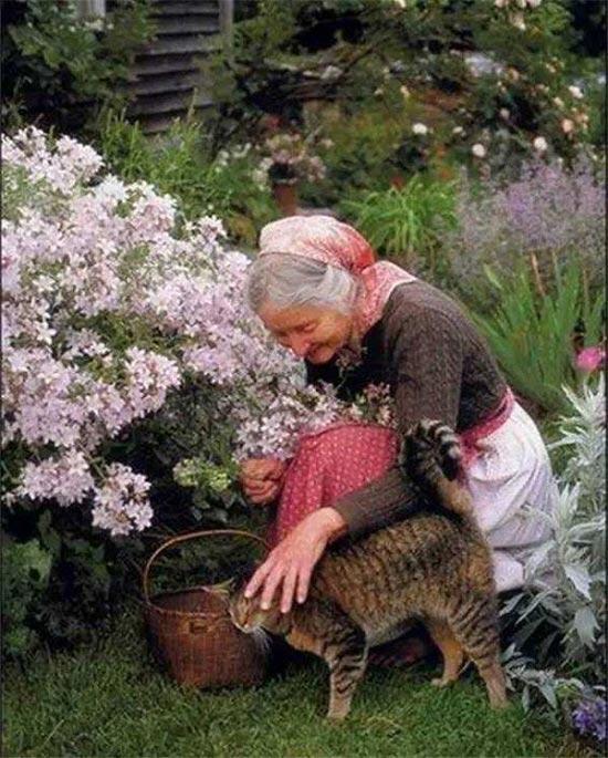 ...hay cô mèo nhỏ đáng yêu, chúng quấn quýt theo bà từng bước chân mỗi khi bà làm vườn.