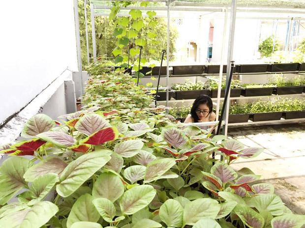 Bà mẹ hai con thiết kế giá trồng rau ba tầng với rất nhiều khay rau xanh tốt.