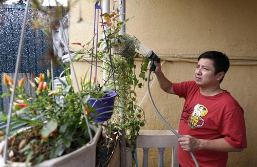 Ngoài thú chơi đồ cổ, Chí Trung còn có thú vui chăm sóc một vườn hoa nhỏ trên sân thượng .