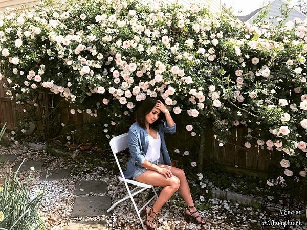 Không chỉ trồng được hàng rào hoa hồng đẹp hút hồn,...