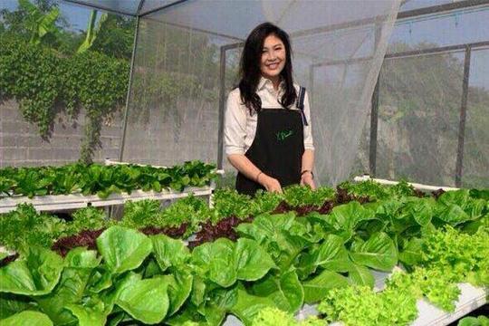 Các loại rau cũng được trồng theo phương thức đa dạng như trồng bằng đất và phương pháp thủy canh.