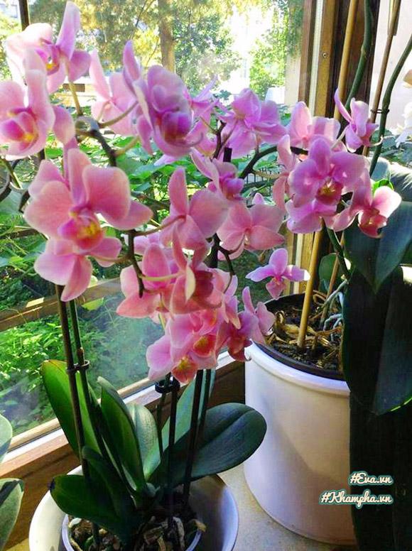 Ngoài trồng rau, anh Đức còn trồng thêm một số loại hoa đẹp.