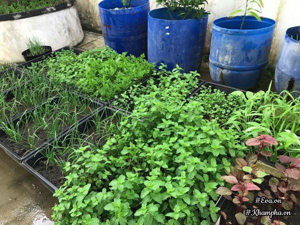 Vườn nhà chị Diễm cũng không thiếu những loại rau thơm.
