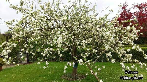 Anh Hùng trồng nhiều hoa phù hợp với khí hậu ở Đức. Khu vườn là nơi giúp anh thư giãn mỗi ngày.