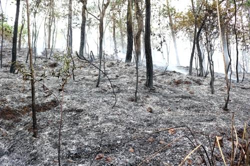 3 ha rừng đã bị lửa thiêu cháy. Ảnh: Giang Chinh