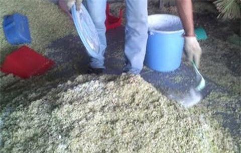 Gia vị xay sẵn thường bị các cơ sở dùng bột tẩy trắng và muối diêm để tẩy trắng. Ảnh minh họa
