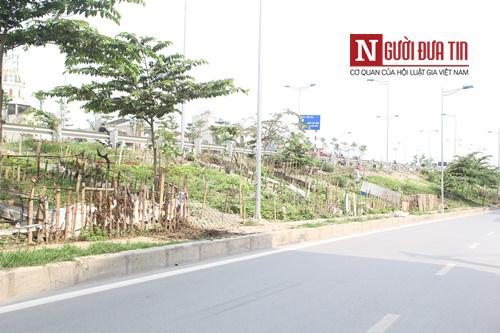 Những vườn rau sạch vệ đường khiến bất cứ ai đi qua cũng thèm thuồng, mơ ước.