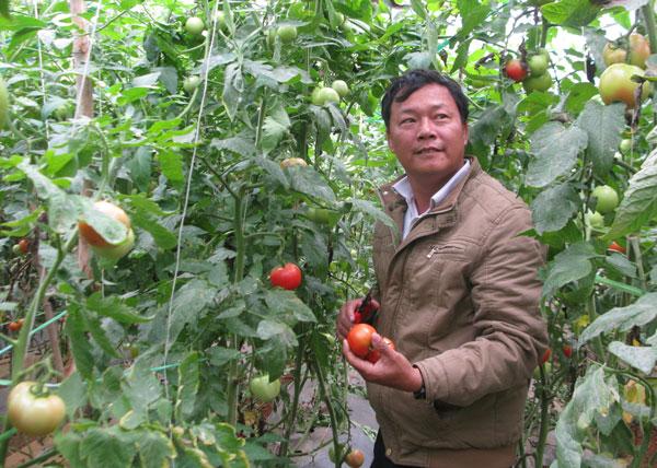 Ông Mai Thanhf Nhã - người tiên phong đưa cây cà chua Sakata và mô hình nhà kính về xax Lộc Nga. Ảnh: Thu Hằng.