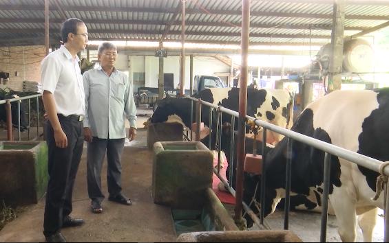 Ông Phi giới thiệu mô hình nuôi bò sữa năng suất cao của gia đình