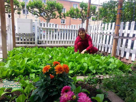Vợ chồng anh Minh Đức đã tự tay xây dựng khu vườn.
