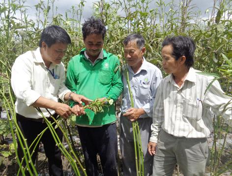 Anh Trần Quốc (áo xanh, thứ 2 bên trái sang) cùng cán bộ Trạm Bảo vệ thực vật huyện Long Mỹ kiểm tra sâu, bệnh trên cây đậu bắp.