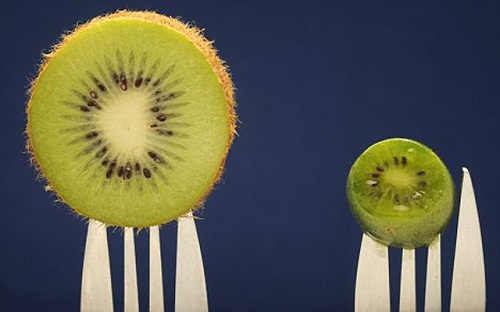 Kích thước của kiwi tí hon so với kiwi thường.