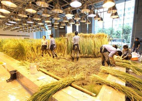 Nhân viên của tòa nhà có thể trồng và thu hoạch rau củ ngay trong không gian làm việc.