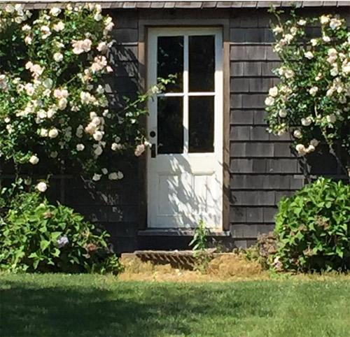 Dàn hoa hồng trắng và hồng xoắn xuýt trên bức tường đằng sau vườn của cô.
